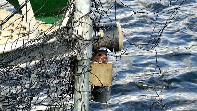 potkan u vody