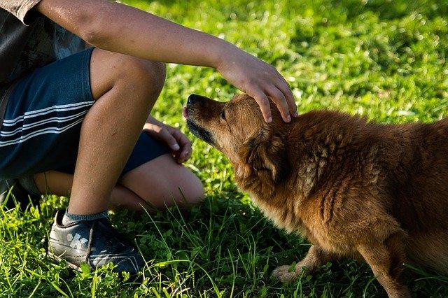 pes s kamarádem
