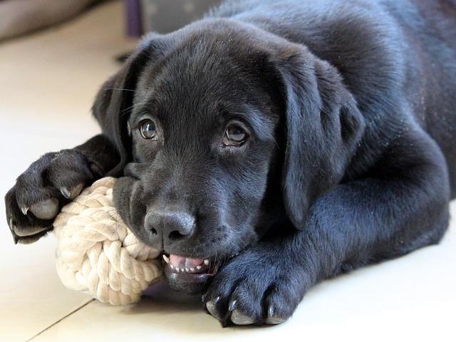 pes se svou hračkou