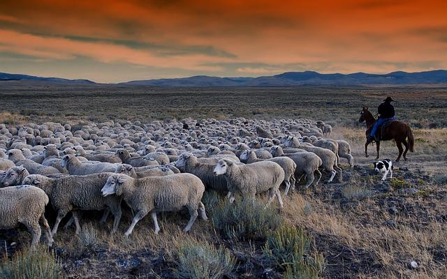 pasák ovcí