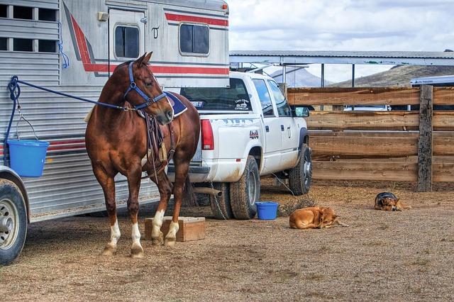 kůň a pes u karavanu