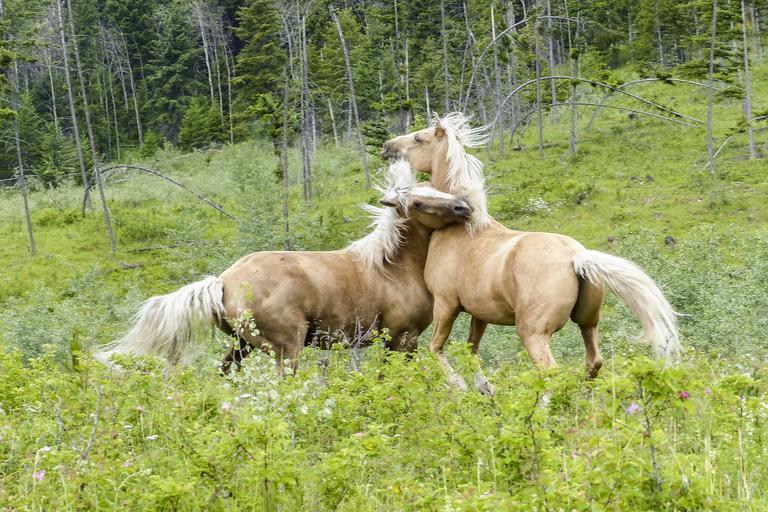 Koně ve volné přírodě